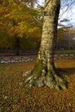 Herbst im Foresta-Schatten, Gargano, Italien Lizenzfreie Stockfotografie