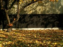 Herbst im Garten Stockfotos