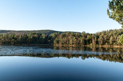 Herbst im Holz Lizenzfreie Stockfotos