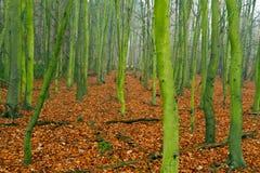 Herbst im Holz stockbild