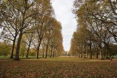 Herbst im London-Park Stockfotografie