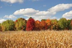 Herbst im Michigan-Ackerland Lizenzfreies Stockbild