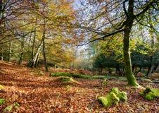 Herbst im neuen Wald Lizenzfreie Stockfotos