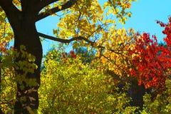 Herbst im New Mexiko Lizenzfreies Stockbild