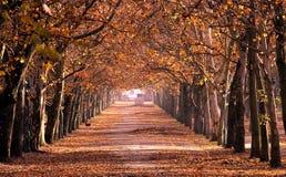 Herbst im Park Stockbild