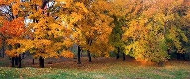 Herbst im Park Stockfoto