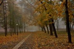 Herbst im Park Lizenzfreies Stockfoto