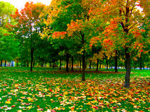Herbst im Park Stockfotos