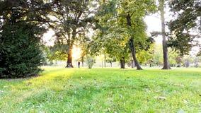 Herbst im Park, in den Bäumen und im Gras stock video
