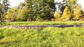 Herbst im Park, in den Bäumen und im Gras stock video footage