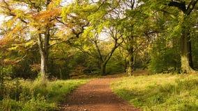 Herbst im Park mit Kastanienbäumen stock video footage