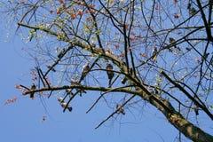 Herbst im Park, Polen lizenzfreie stockbilder