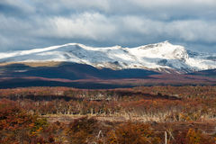 Herbst im Patagonia Kordilleren Darwin, Tierra del Fuego Lizenzfreies Stockfoto