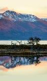 Herbst im Patagonia Tierra del Fuego, Spürhund-Kanal Lizenzfreie Stockfotos