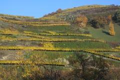 Herbst im schwarzen Wald Stockbilder