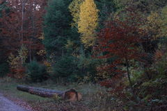 Herbst im schwarzen Wald Stockfoto