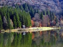 Herbst im See Stockbild