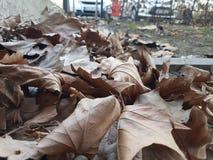 HERBST. Im Herbst sind die Blätter bunt Stock Photos