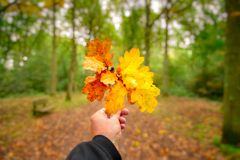 Herbst im Wald Lizenzfreie Stockbilder