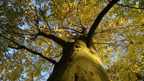 Herbst im Wald stock footage