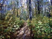 Herbst im Wald stock video