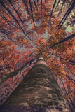 Herbst im Wald Lizenzfreies Stockfoto