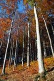 Herbst im Wald stockfotografie