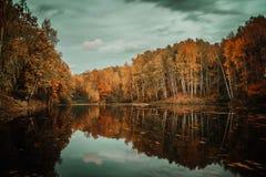 Herbst im Wald Stockbild