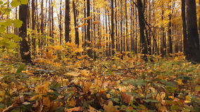 Herbst im Wald stock video footage