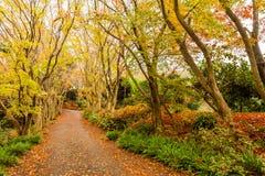 Herbst im Wald bei Japan lizenzfreie stockbilder