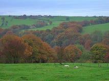 Herbst im Wald von Bowland Stockbilder