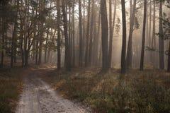 Herbst im Waldschönen grünen Wald und -straße Stockfotos