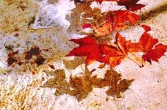 Herbst im Wasser Lizenzfreie Stockfotografie