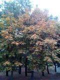 Herbst ist gekommen Es gibt keinen Laubfall schon, aber die Bäume sind gelb stockbild
