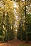 Herbst ist hier Lizenzfreies Stockfoto