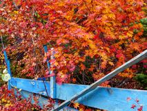 Herbst ist wundervoll stockfotografie