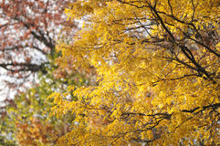 Herbst-Jahreszeit Stockbild