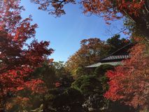 Herbst in Japan Stockfoto