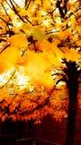 Herbst in Köln 5 Lizenzfreie Stockfotos