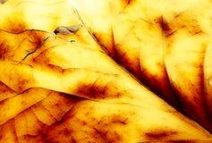 Herbst in Köln 4 Stockfoto