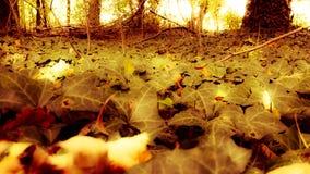 Herbst in Köln 3 lizenzfreie stockfotos