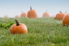 Herbst-Kürbis-Änderung am Objektprogramm Stockfoto