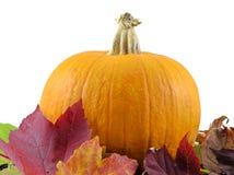 Herbst-Kürbis stockbilder