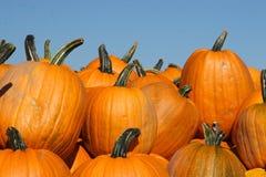 Herbst-Kürbise Stockbilder