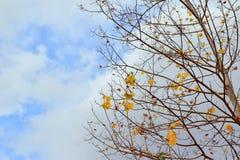 Herbst kam stockbilder