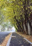Herbst kam in die Stadt stockfotografie