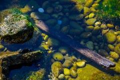 Herbst kam in Kotor-Bucht lizenzfreie stockfotos
