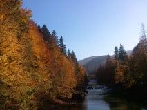Herbst in Karpaten Stockbilder