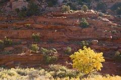 Herbst-Kasten-Ältestes stockbild