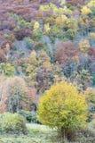Herbst in Katalonien Spanien Stockbilder